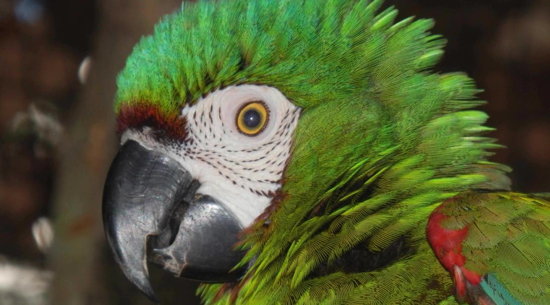 Salva la vida silvestre del Amazonas.